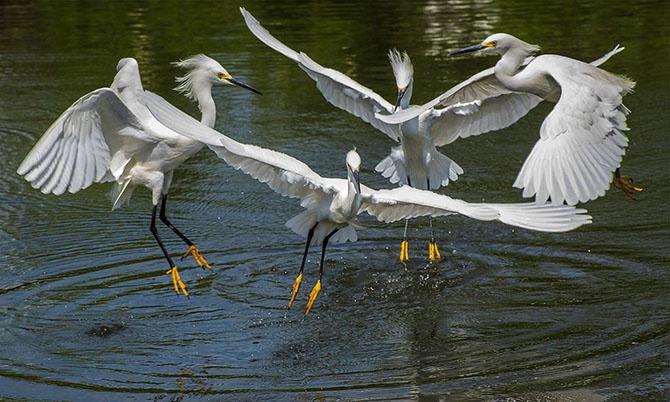 Победители фотоконкурса «Focus on Nature 2014» (36 фото)