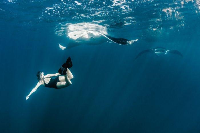 Необычная фотосессия с китовыми акулами (21 фото)