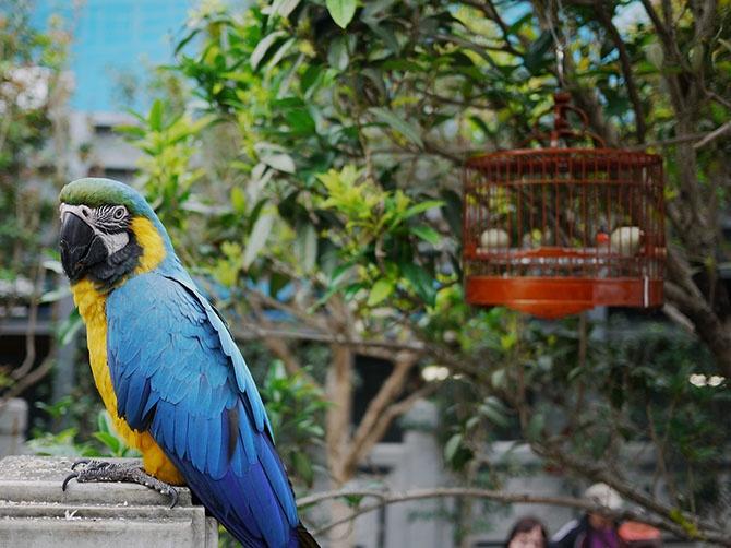 Птичий рынок в Гонконге