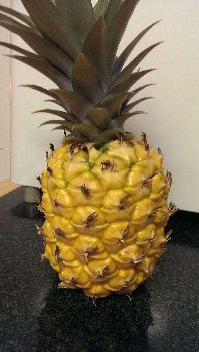 Сажаем ананас дома (20 фото)