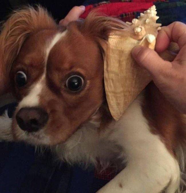 Смешные собаки (24 фото + 8 гиф)