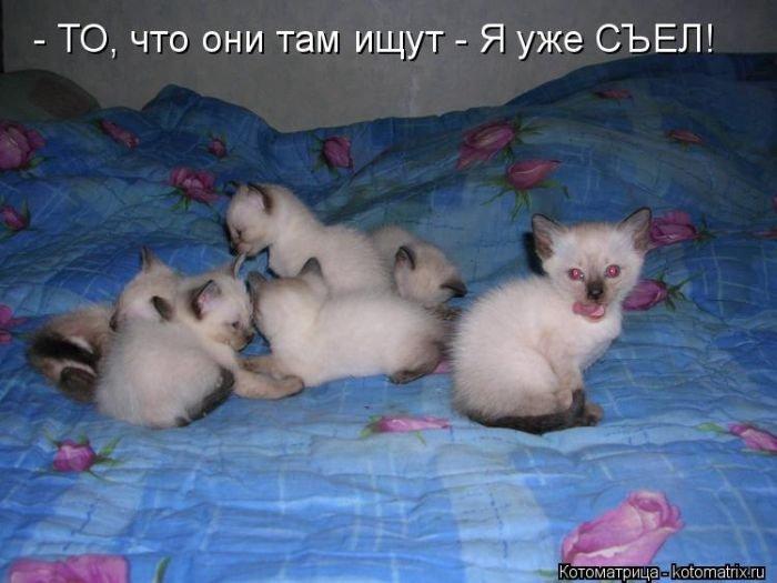 Лучшие котоматрицы этой осени