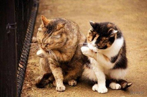 20 синхронных котов
