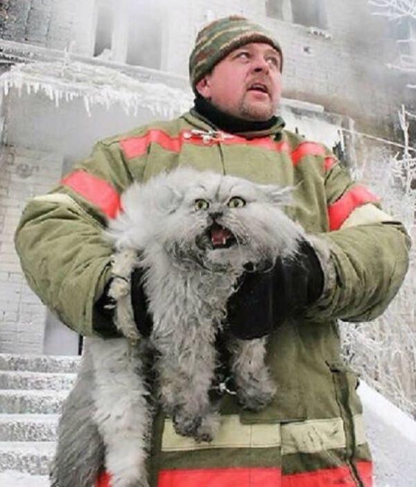 Русский кот VS Датский кот