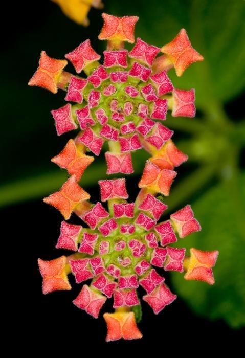 Завораживающая геометрия в природе