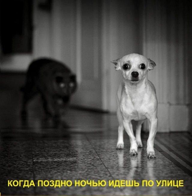 Прикольные картинки (50 фото)