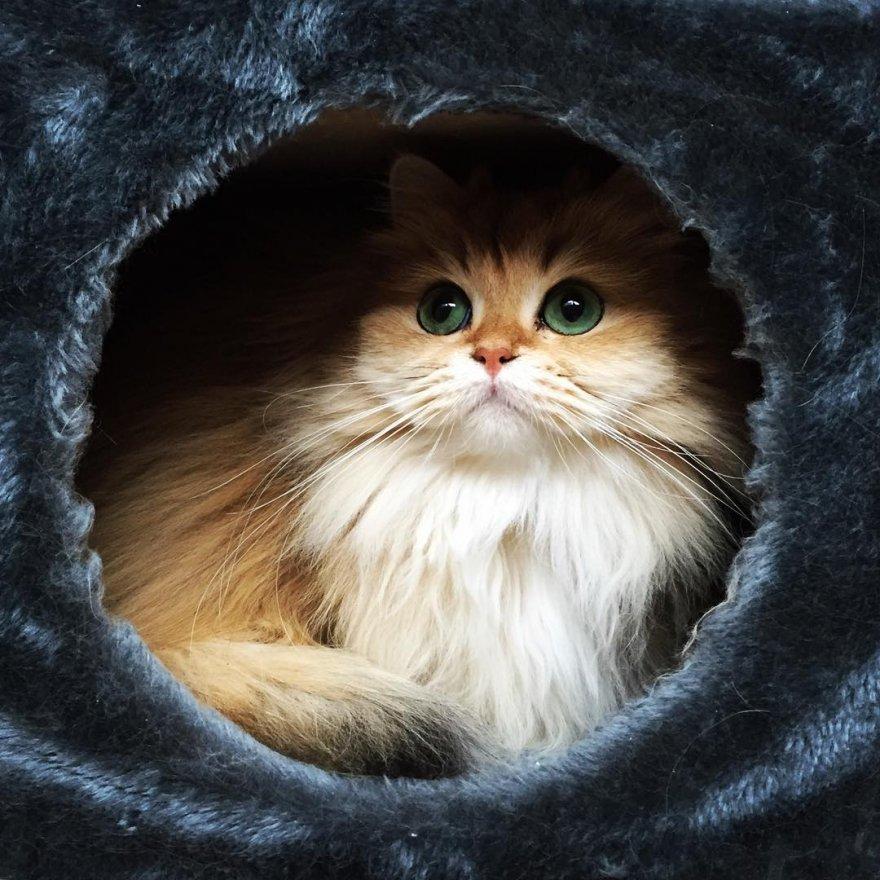 Кошка Смузи - самая фотогеничная кошка на свете
