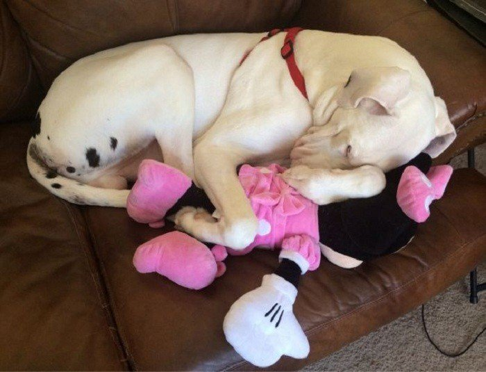 Забавные спящие питомцы