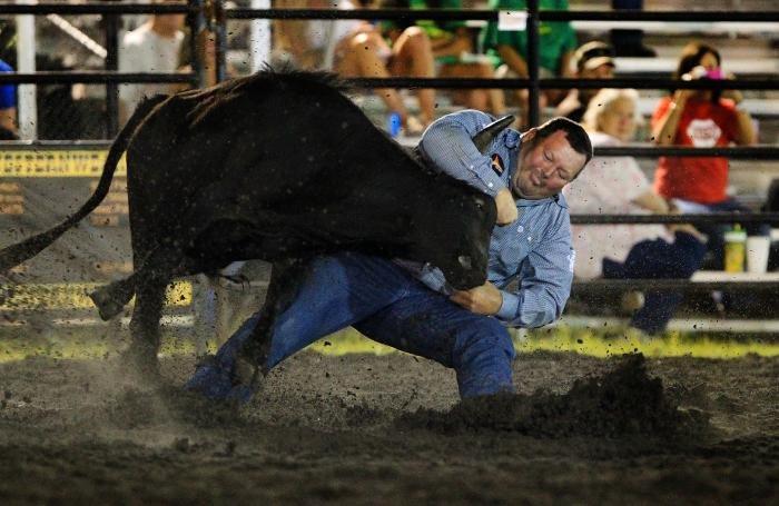 Необычный и опасный эксперимент с быками