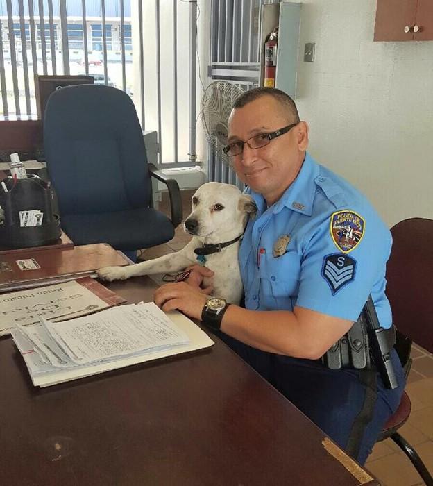 Бездомный пес нашел работу в полицейском участке