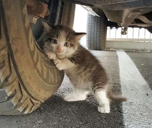 Котенку повезло
