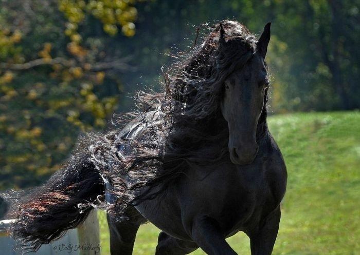 Самый красивый в мире конь