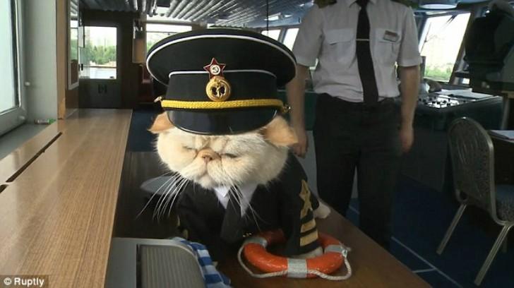 Речной круиз с котом за штурвалом