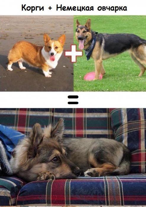 Результат любви собак разных пород