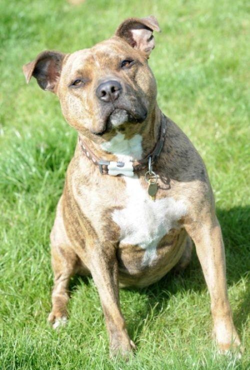 Фрейя - самая одинокая собака Великобритании