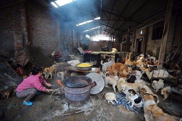 Женщина в Китае выкупила сотню собак со скотобойни