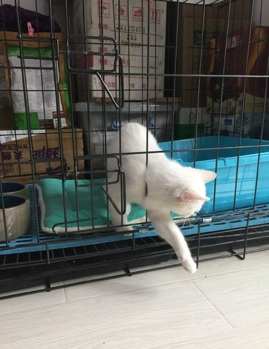 Кошака сложно запереть в клетку (5 фото)