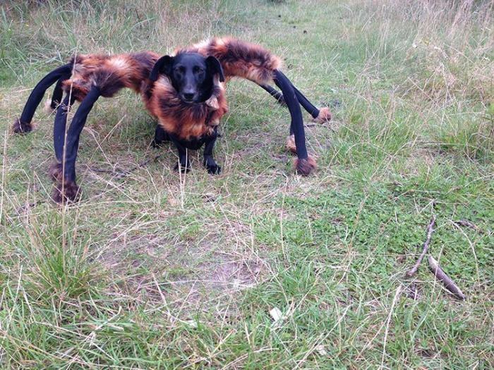 Шестилапая собака-паук нагоняет ужас (2 фото)