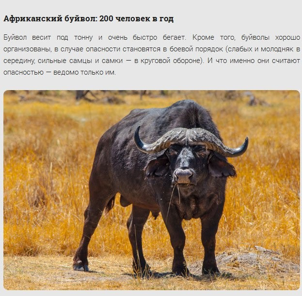 Животные-убийцы людей (17 фото)
