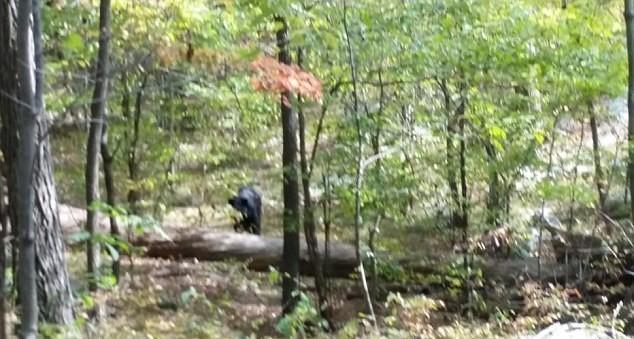 Студент сфотографировал медведя, который его убил (5 фото)