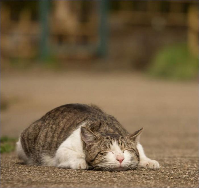 Токийские коты