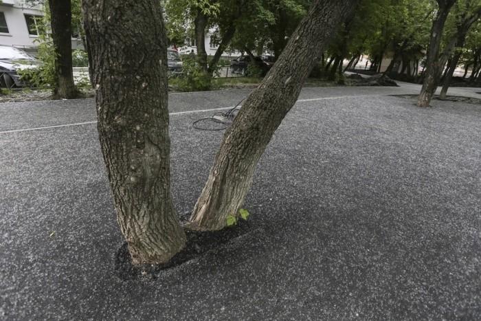 В Тюмени деревья закатали в асфальт