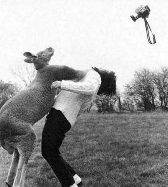 Животные атакуют (17 фото)