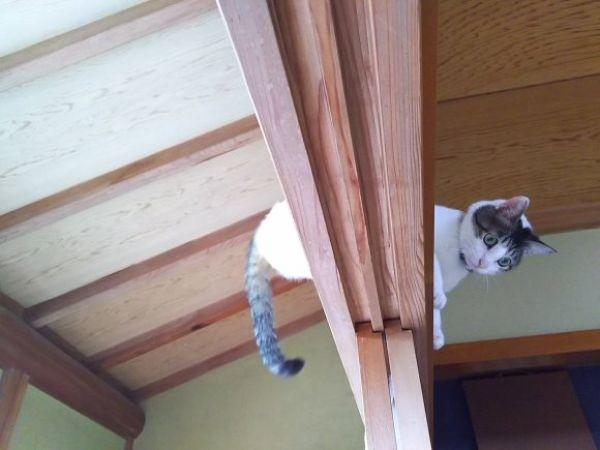 Традиционные японские двери совершенно не подходят для кошатников