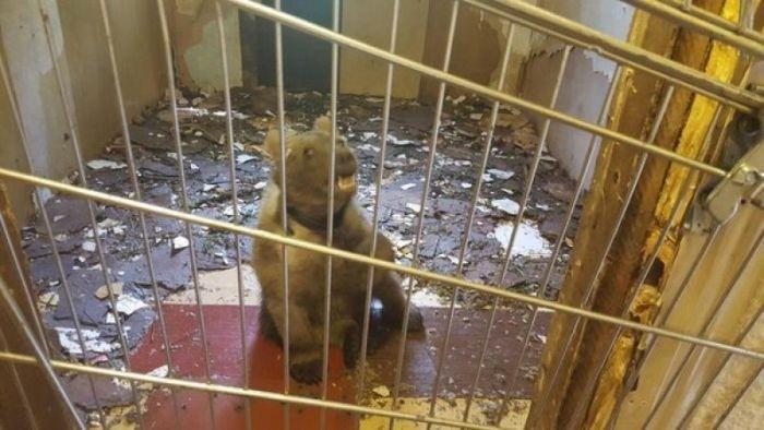 Медвежонка обнаружили в гараже на юге столицы