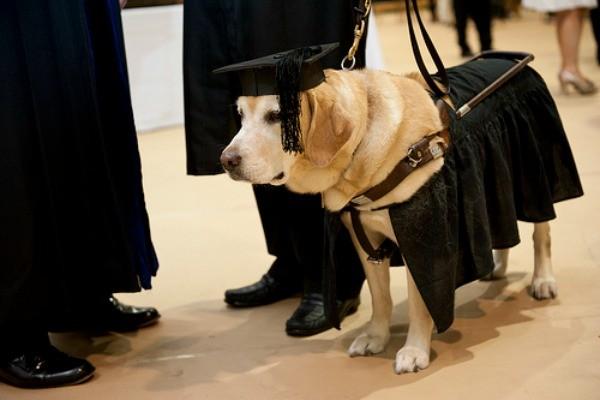 7 животных с высшим образованием