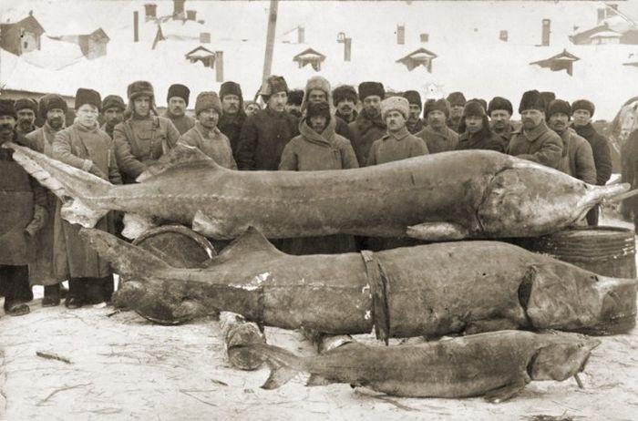 Старые фото русских рыбаков