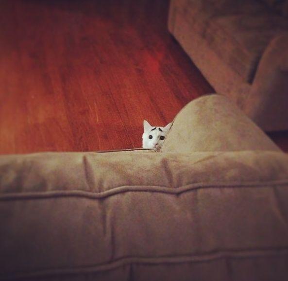 Самый эмоциональный кот в мире Бровастик (30 фото)