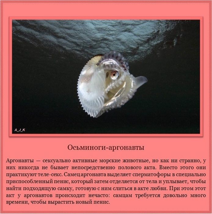 Необычайные проявления сексуальности у животных (11 фото)