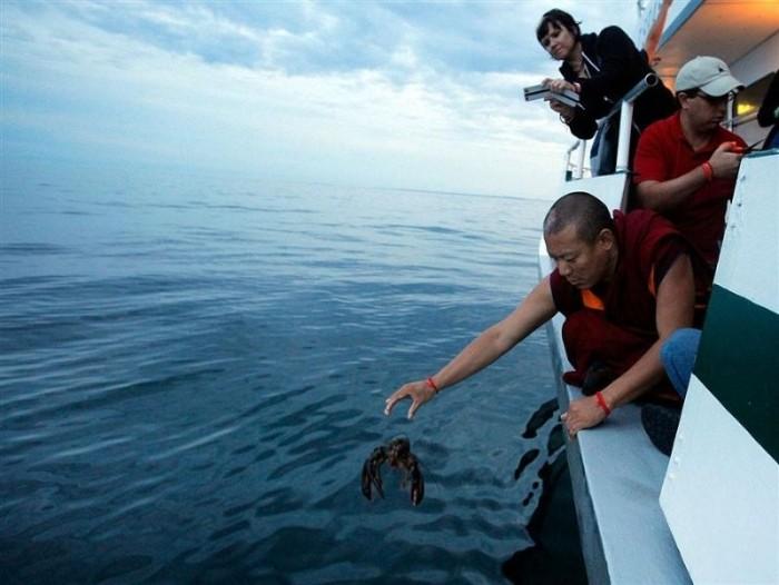 Буддийские монахи выпустили сотни омаров обратно в океан