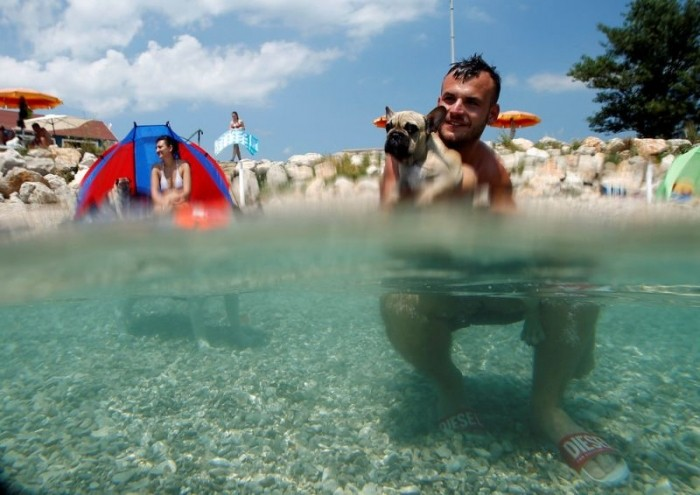На хорватском побережье открылся бар для собак