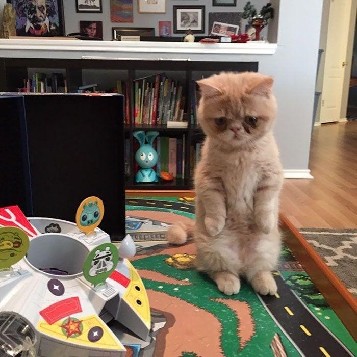 Кот Джордж предпочитает крепко стоять на задних лапах