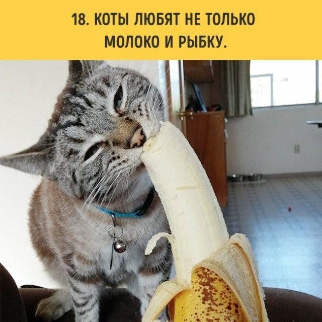 Если вы планируете завести кота