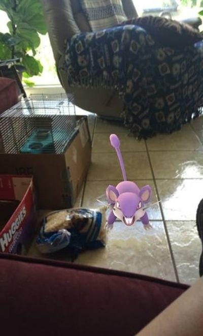 Поклонники игры Pokemon Go случайно спасли животных