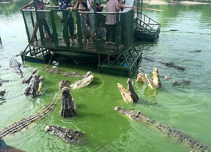 Аттракцион для любителей крокодилов в Таиланде