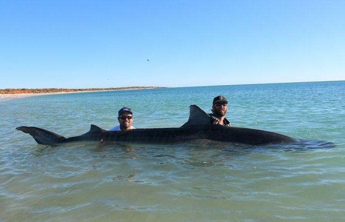 Австралийские рыбаки порыбачили на акул