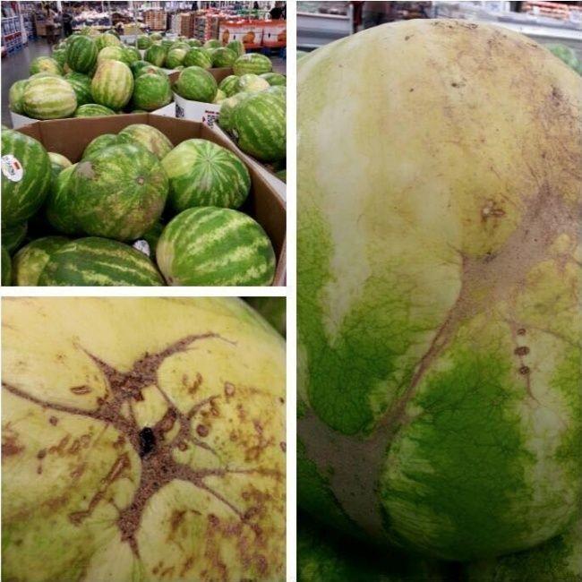Как выбрать вкусный арбуз наглядные примеры