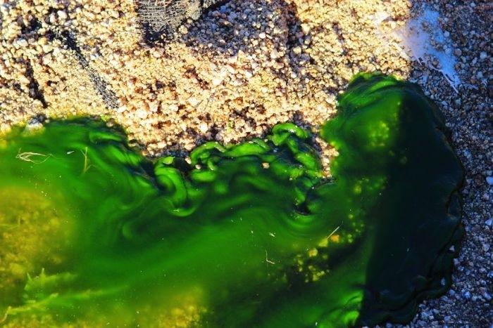 Токсичная слизь из канализации