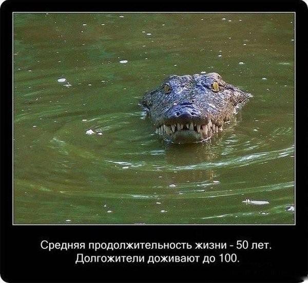Удивительные факты о крокодилах