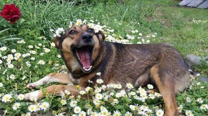 Счастливые собаки, которых только что забрали из приюта (35 фото)