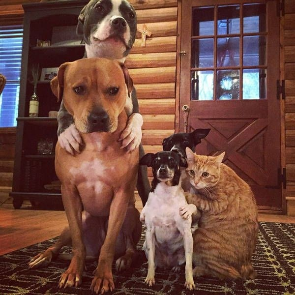 Дружная звериная семья