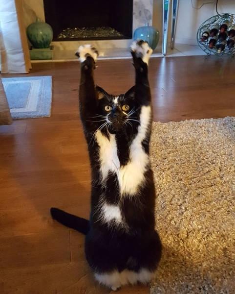 Кошка, которая всегда сдается