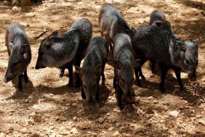 Голодающие звери венесуэльских зоопарков