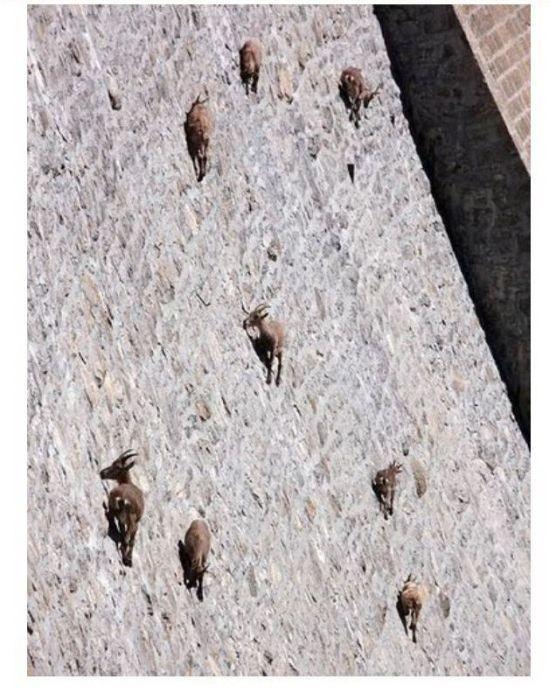 Антигравитационные козлы (2 фото)