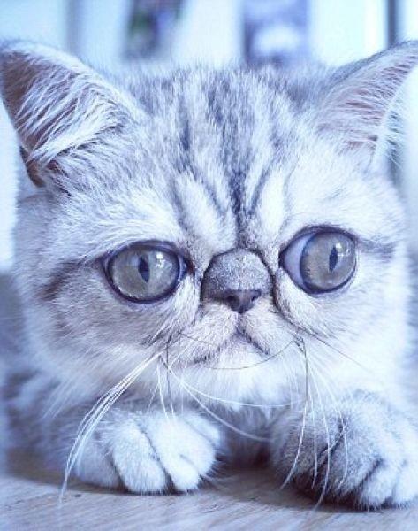 Знакомьтесь Герман - самый удивленный кот