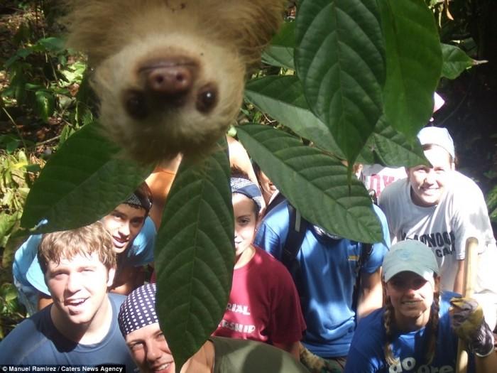 Забавные фотографии животных, которые неожиданно вклинились в кадр